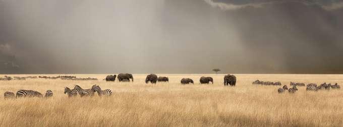 UF Wildlife Forensic Sciences and Conservation wildlife scene