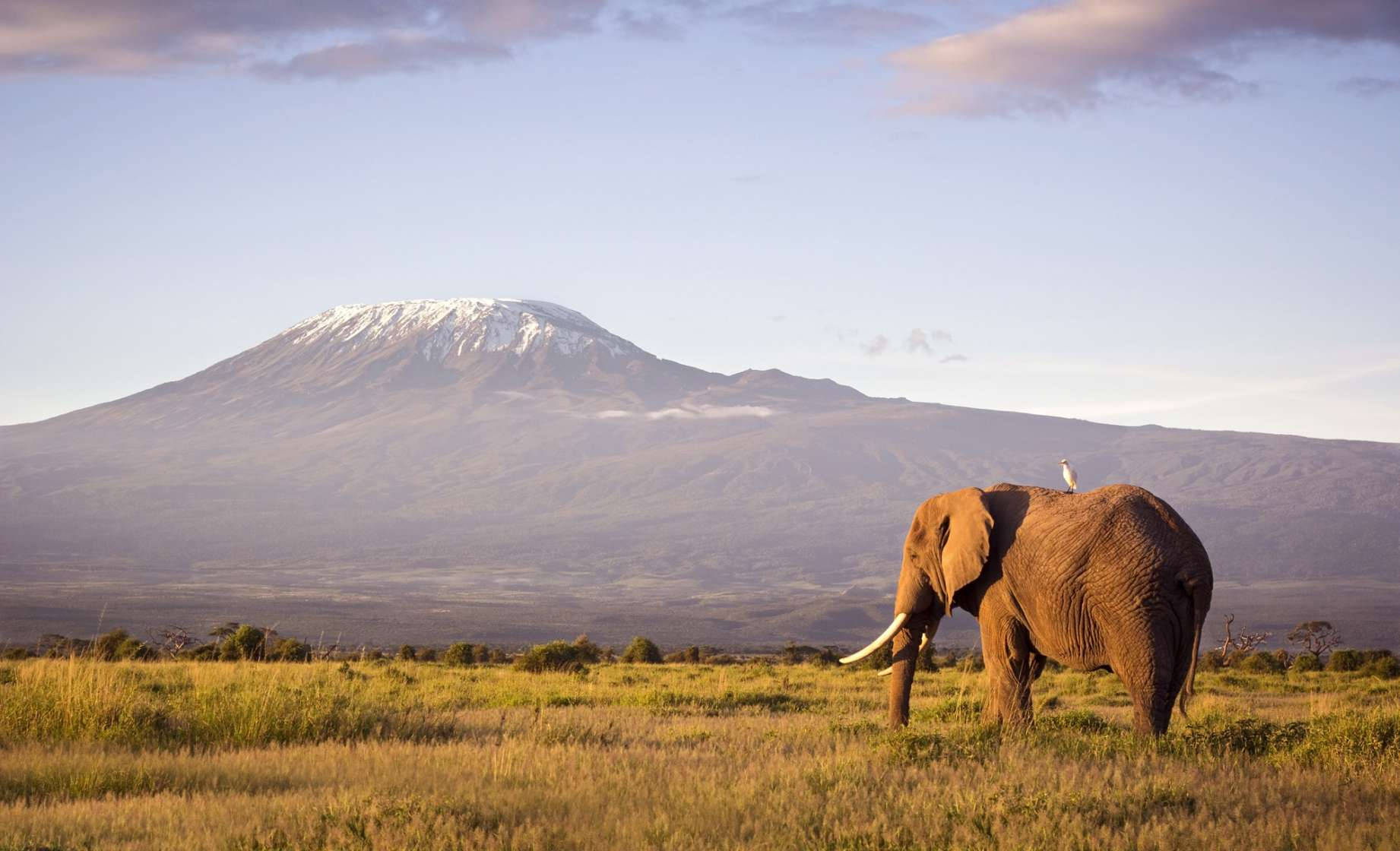 UF Wildlife Forensic Sciences and Conservation elephant-mountain